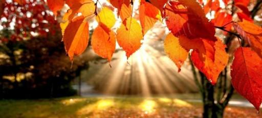 i-colori-dell-autunno-2014-legambiente-valtriversa-704x318